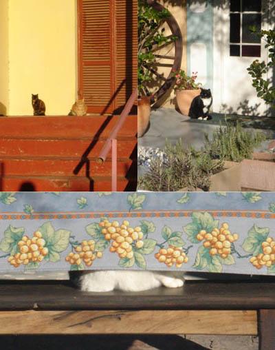 Karoo Sunny Cats